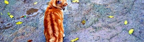 Photo Tips:  Cats in Spain
