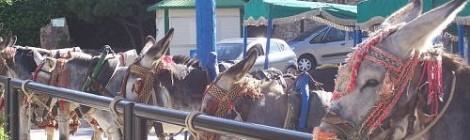 Got donkey?