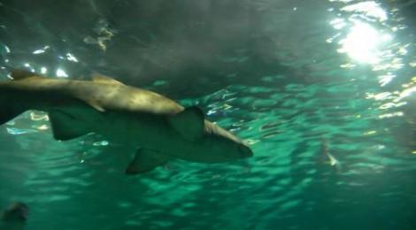 Shark! (at the Barcelona Aquarium)